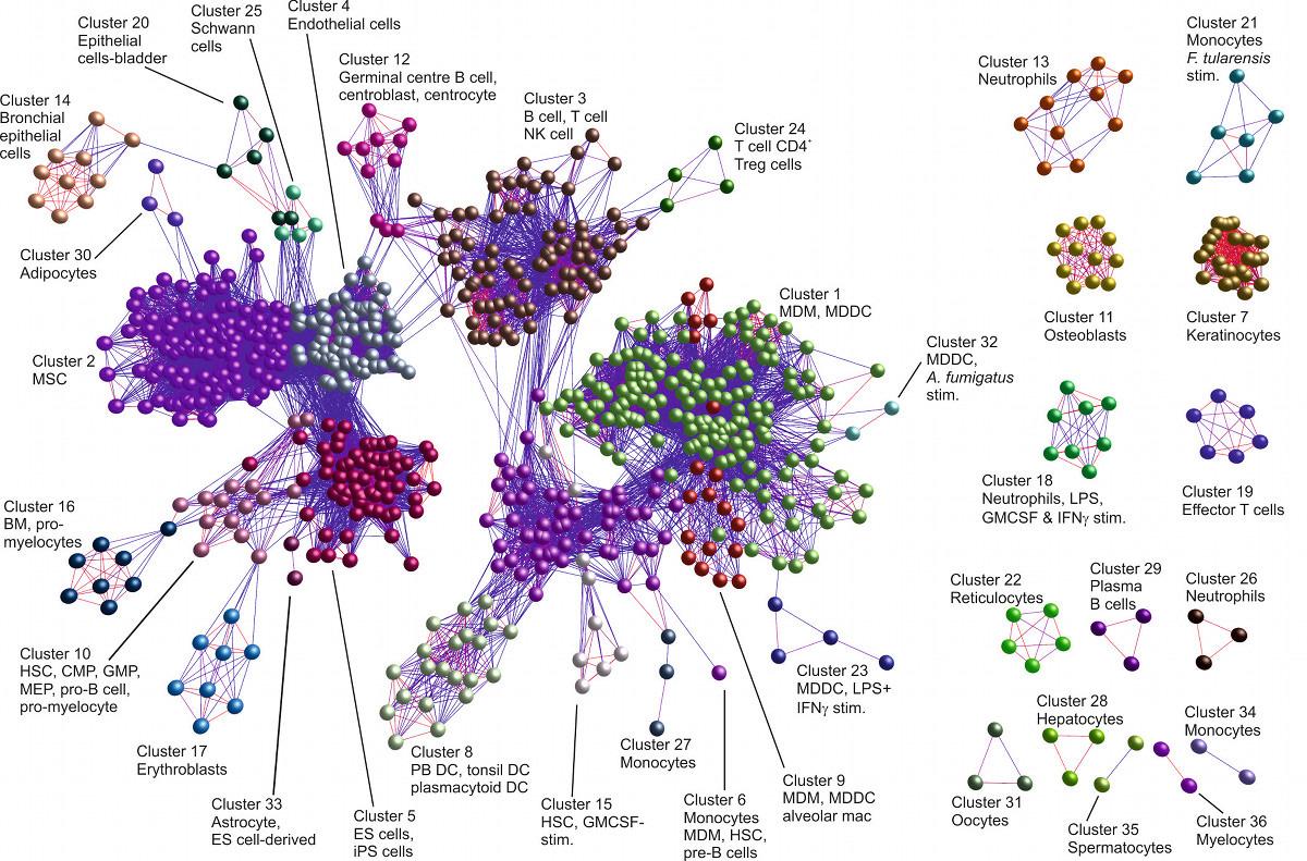BioLayout Network