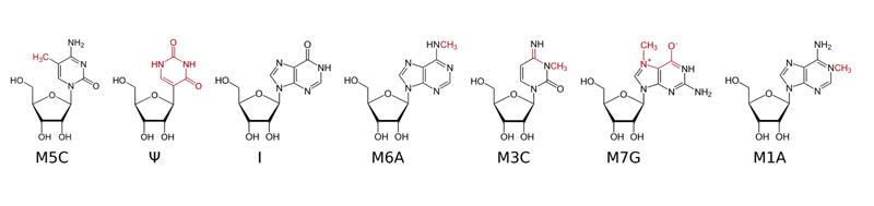 Enright-nucleosides
